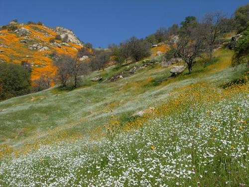 California Wildflowers © Melanie Keeley