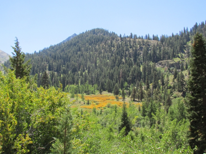 Cold Springs Trail view, Mineral King, Sequoia National Park © Denise Griego
