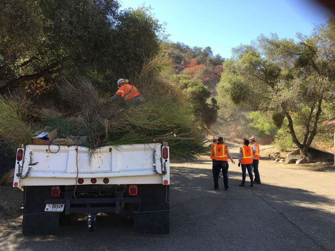 Removing Spanish broom along the Kaweah River by Ginger Bradshaw