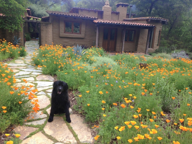 Native Plant Gardens Alta Peak Chapter California Native Plant